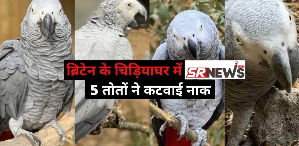 britain ke chidiyaghar 5 parrots
