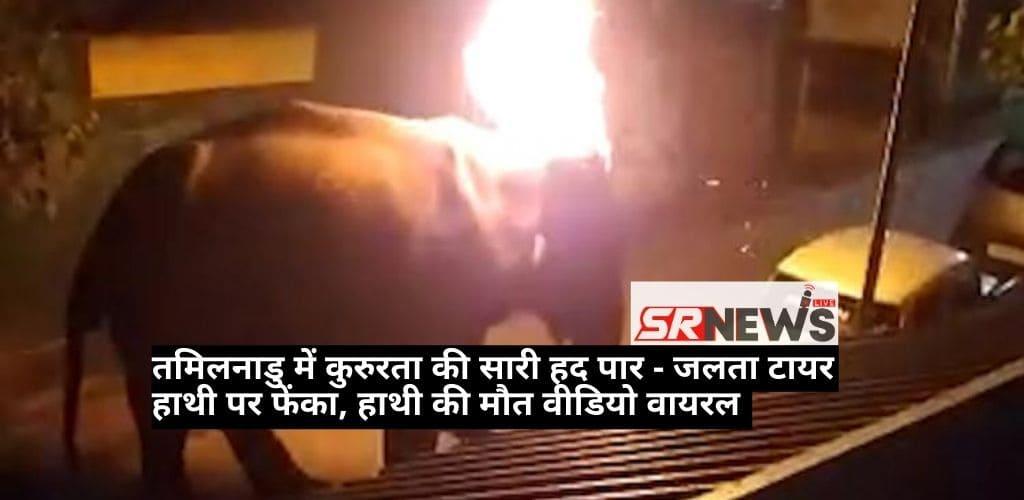 Elephant Fire in Tamilnadu