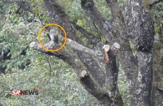 Owl hidden picture