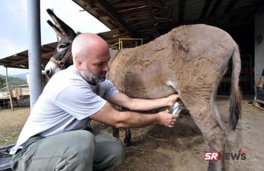 Donkey Milk Benefits