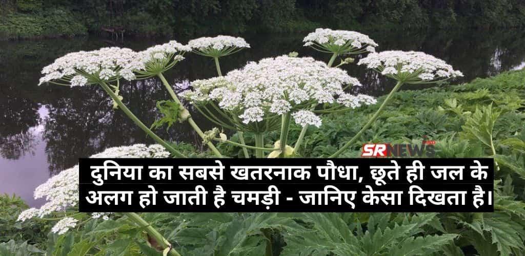 The world Most dangerous plant