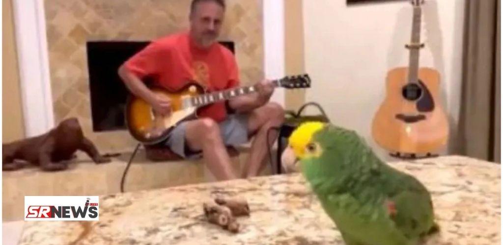 Viral Parrot Video