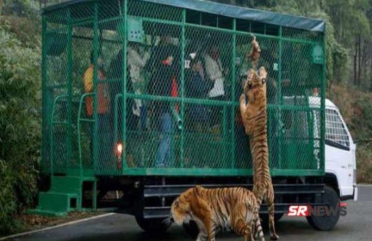 Dangerous Zoo
