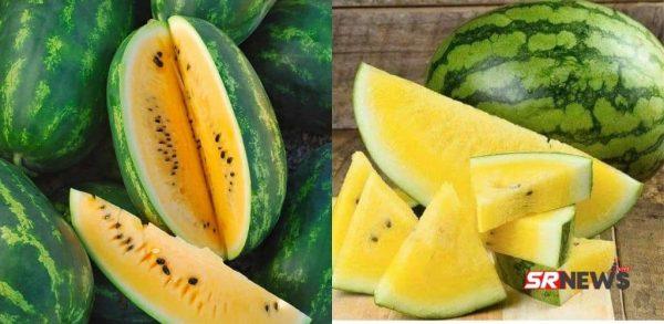 कभी खाए है पीले तरबूज़ (Yellow Watermelon)? देश के इस राज्य में हो रही है खेती – जानिए खासियत।