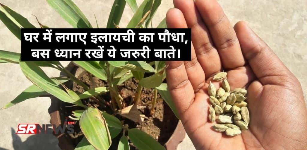 How to Grow Cardamom Plant