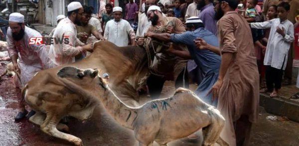 अब नहीं दी जाएगी बक़रीद के मौक़े पर जम्मू कश्मीर में गाय और ऊंट की कुर्बानी। लागू हुआ यह नियम