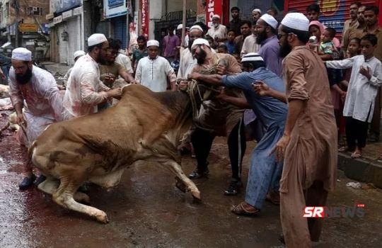 cow slaughter ban in jammu kashmir