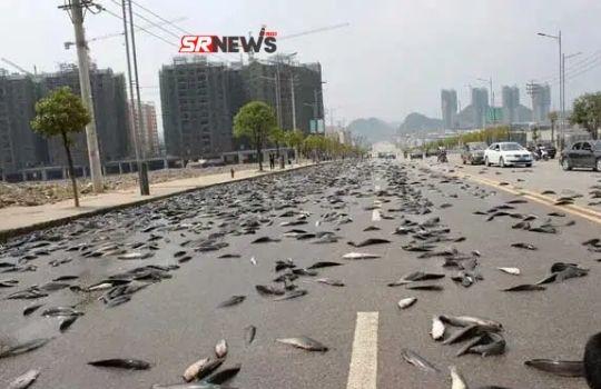 fish rain in the city