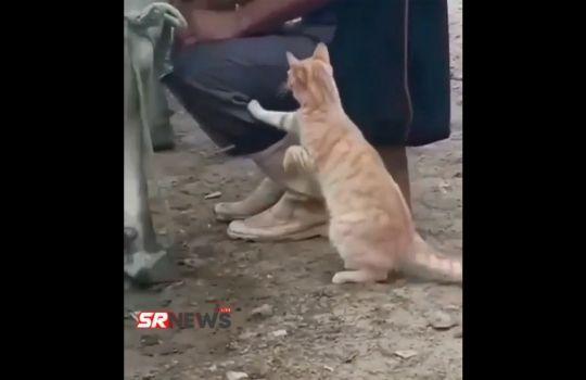 Cat Funny Video