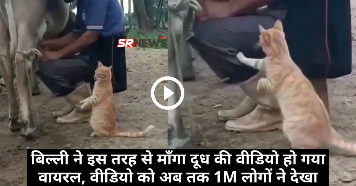 Cat Funny Viral Video