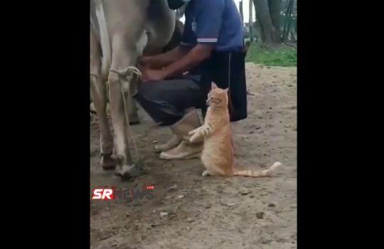 Cat Viral Video