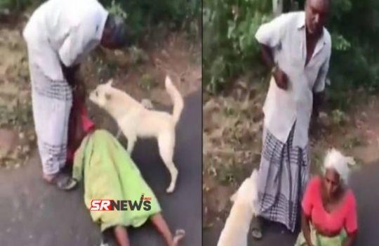 Dog Viral video