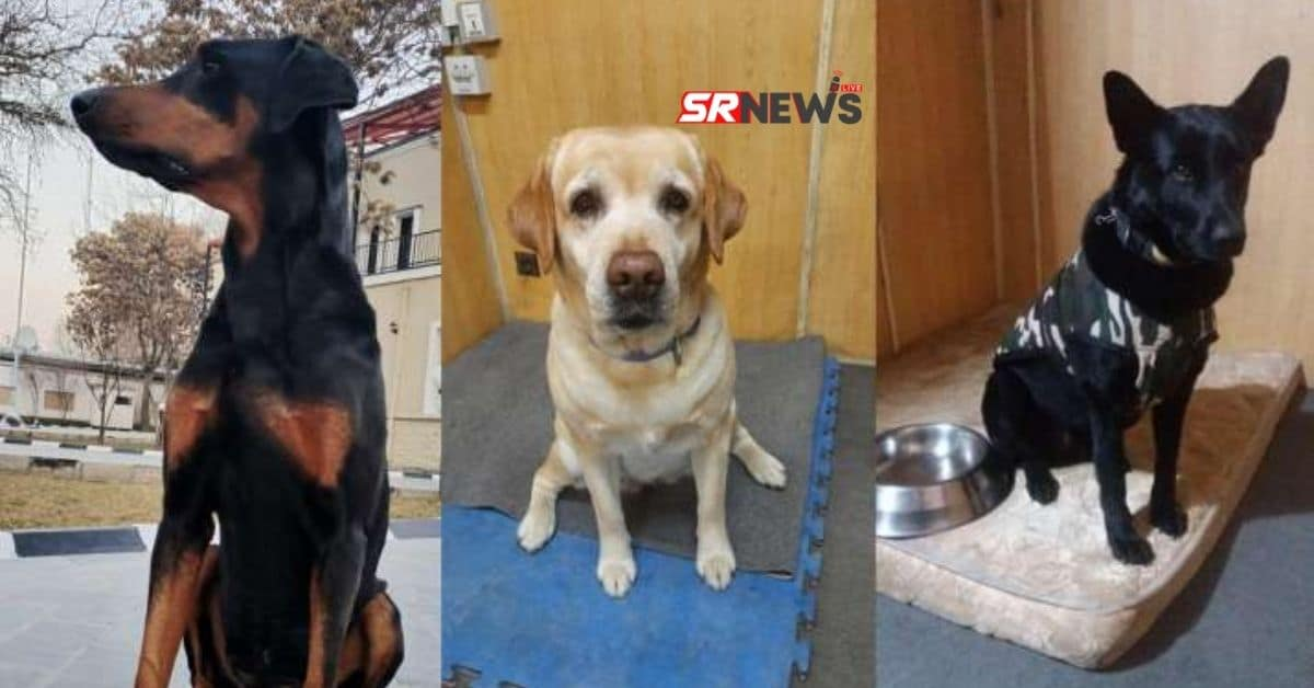 Three Sniffer Dogs Rescue from Afganistan
