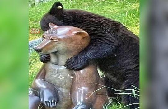 Bear Funny News