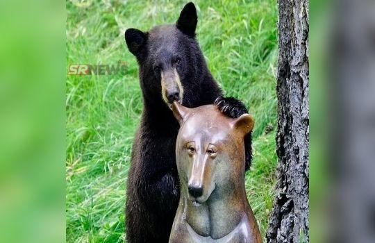 Bear News