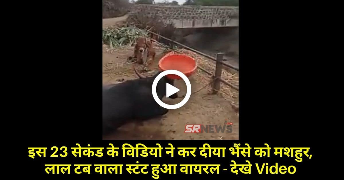 Buffalos Funny Viral video