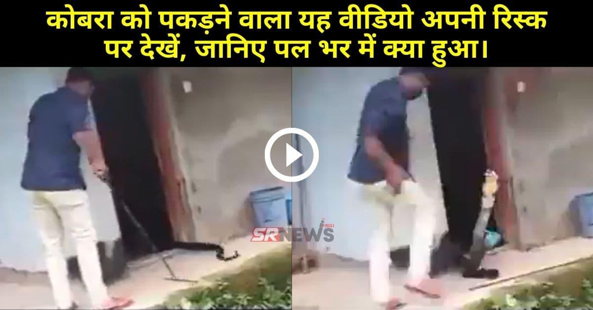 Cobra Snake Viral Video