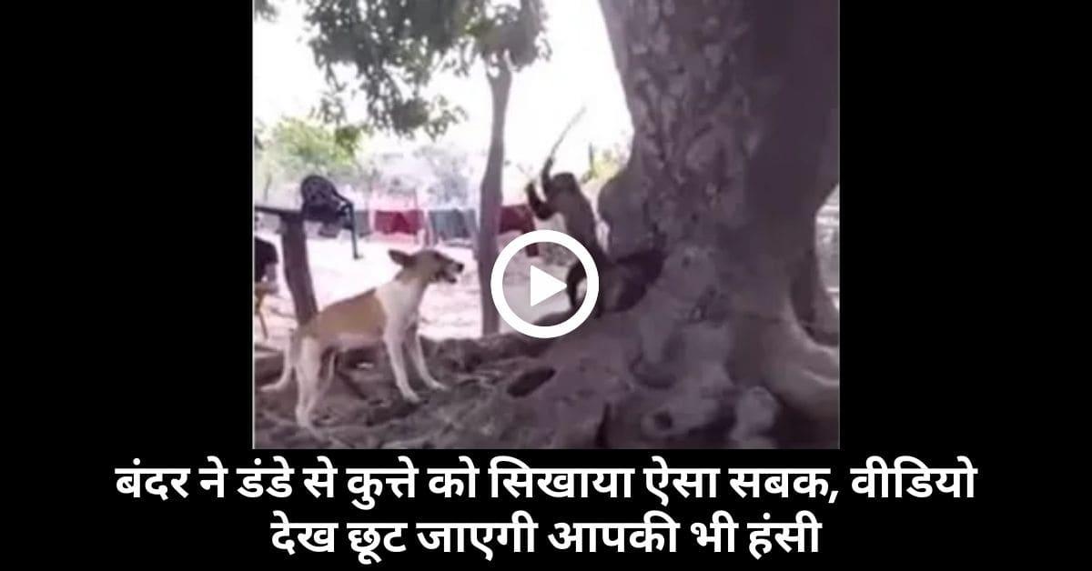 Dog Monkey funny video