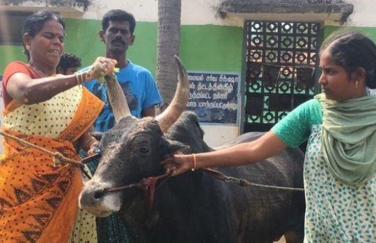 Madurai News