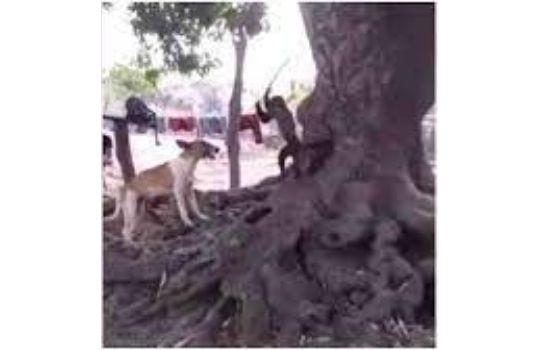 Monkey Dog viral video