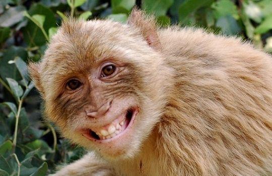 Monkey Revenge in karnataka