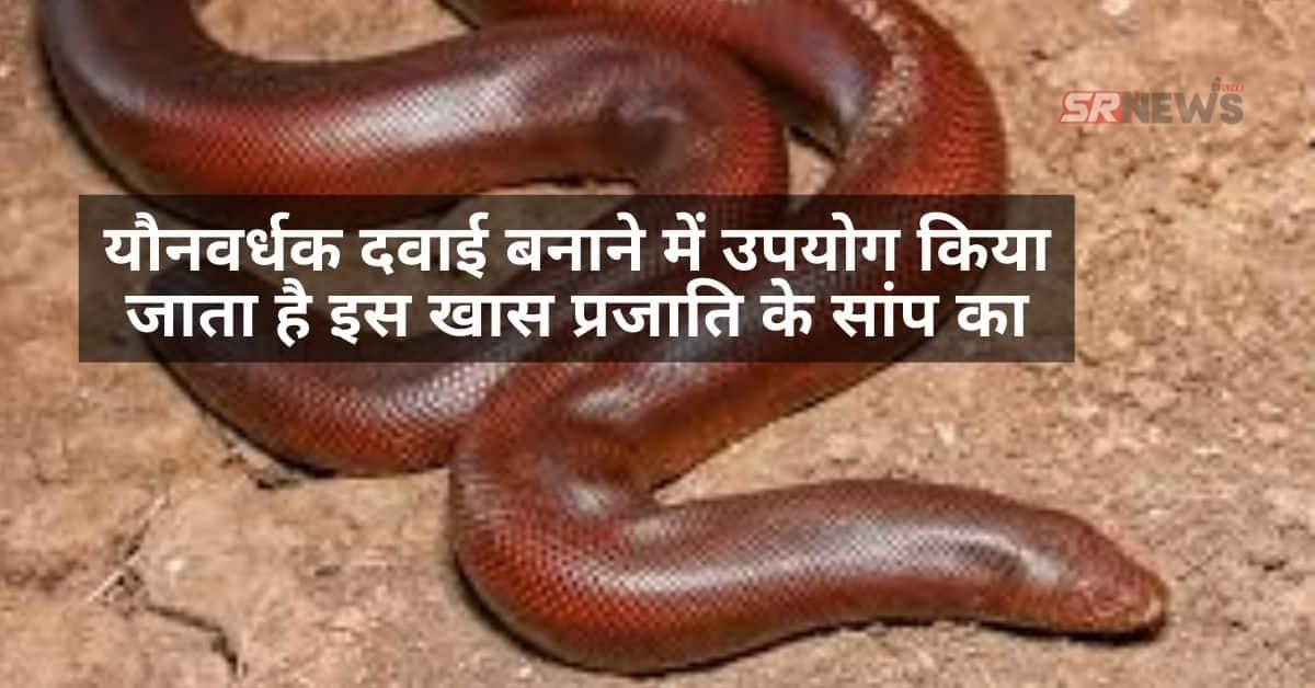 do muha snake