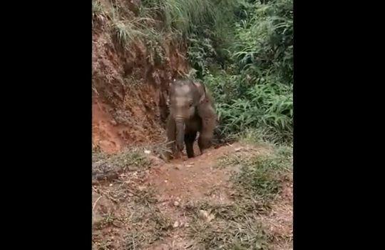 Elephant child viral video
