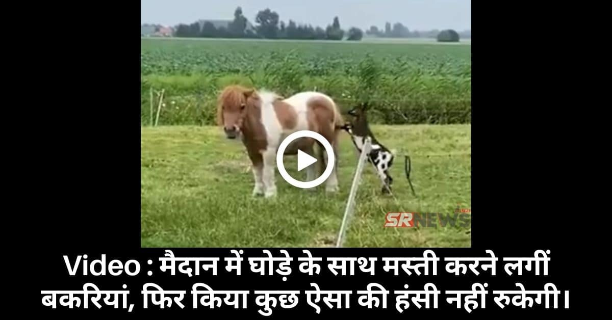 Horse Goat funny video