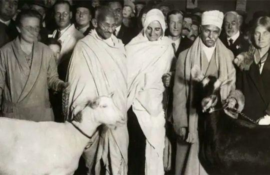 Mahatma Gandhi Bakri ka dudh pite the