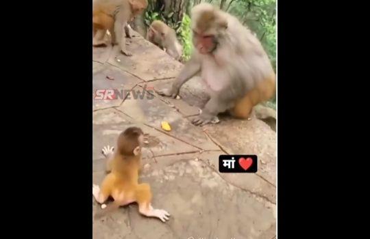 Monkey viral video