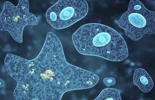 brain eating ameba case in us