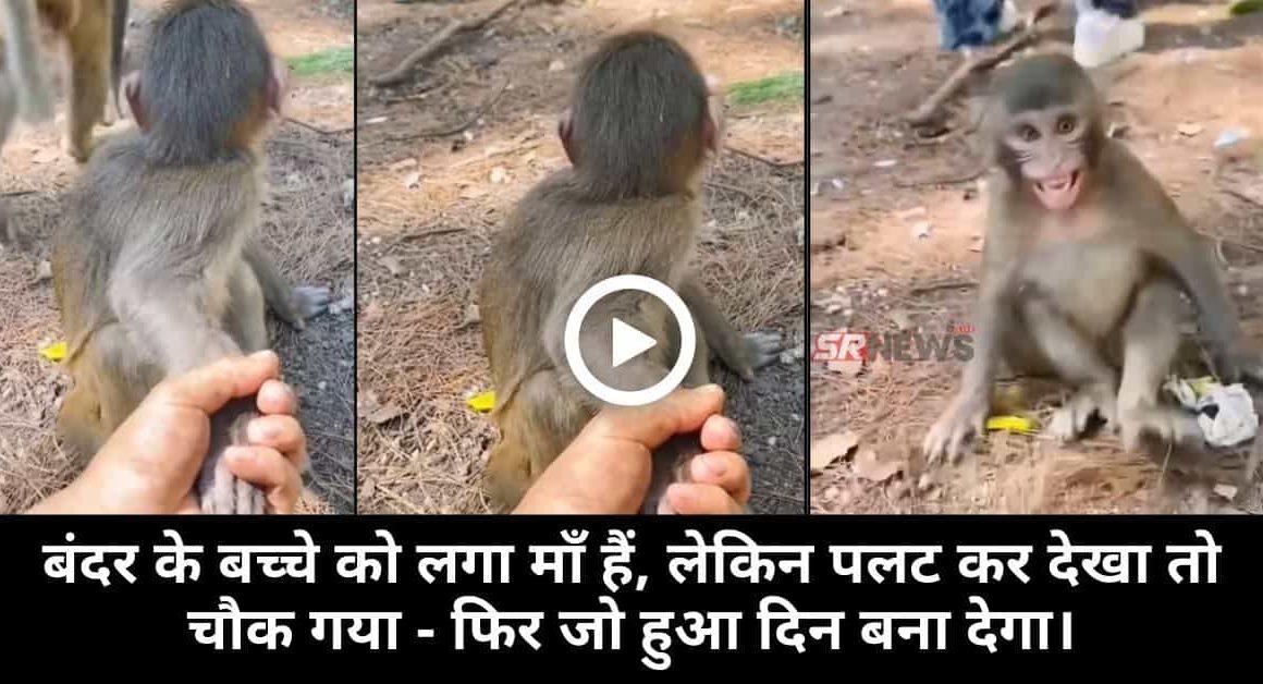 monkey child funny video